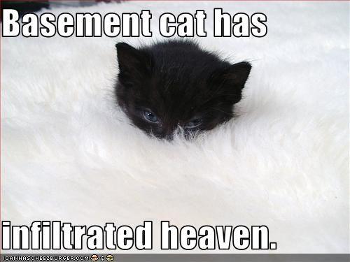 Find the Beautiful Funny Basement Cat Memes