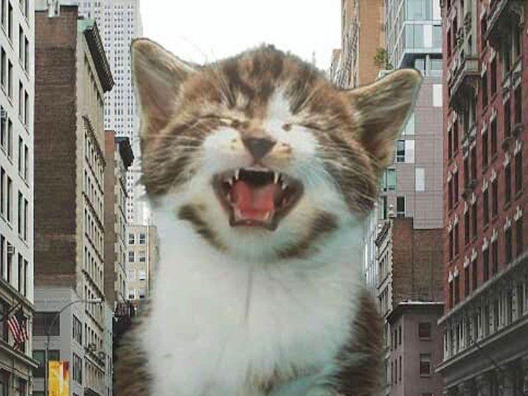big cat photoshop