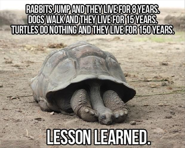 Funny Animals with Captions 27