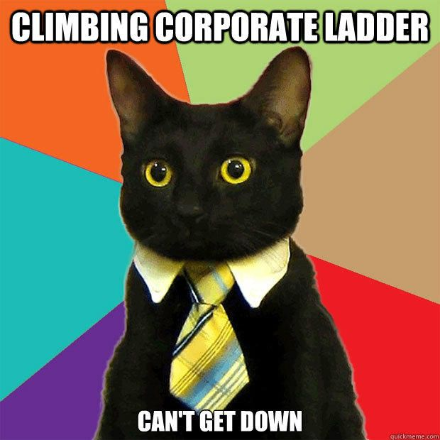 this is the real business cat