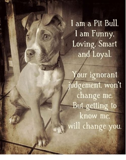 I am a Pit Bull I am Funny Loving Smart and Loyal our ignorant judgement won t change me i But ting to know me will change you Meme