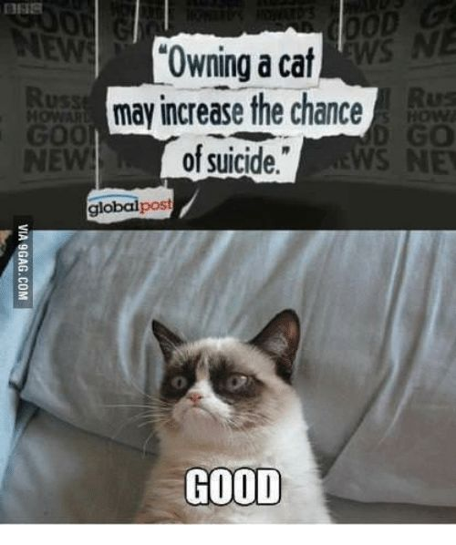 """Cat a Cat and Image May Contain Meme and Text 0D """"Owning"""