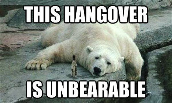 Unberable Hangover Reyhydrate Cat Funny Hangover Memes