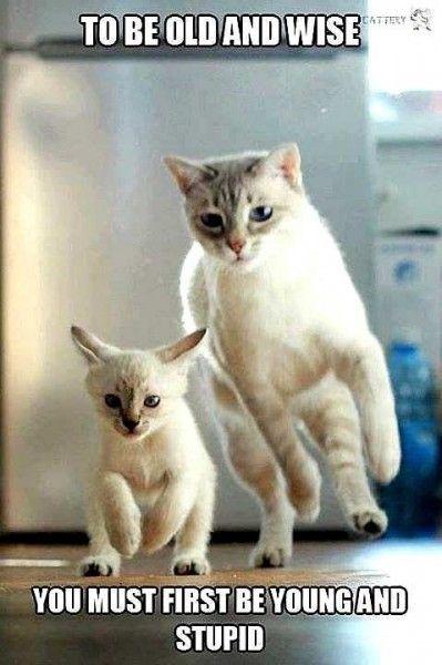 d1990b5aab2d8db4b6a54cd6d–best teacher funny cat memes stripallquality55smooth 15contrast10