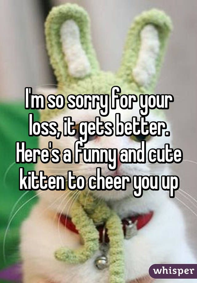 I m so sorry for your loss it s better Here s a funny and cute kitten