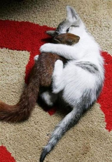 """these two are """"siblings"""" after the mama cat adopted this injured baby squirrel presh"""