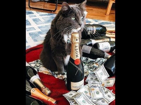 Cats Showered With Money Alcohol And Guns FUNNY CAT plications