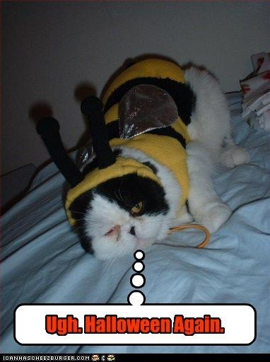 ugh halloween costume dress up outfit Cats captions