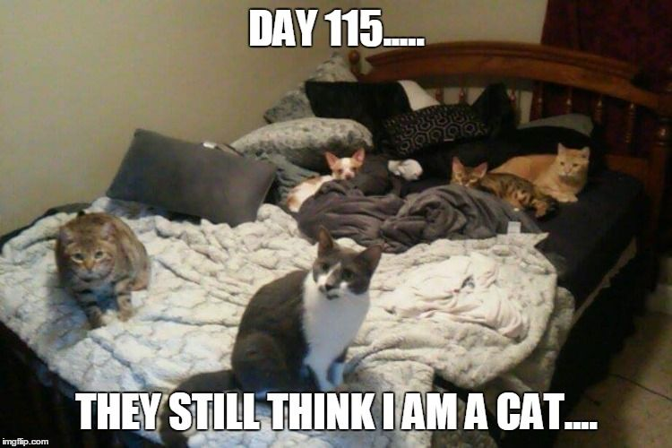 Find the Best Of Funny Chiauwa and Cat Pictures with Captions