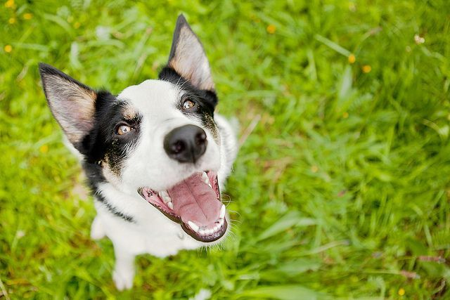 Smiling Dogs Crazy Dog Funny Dogs