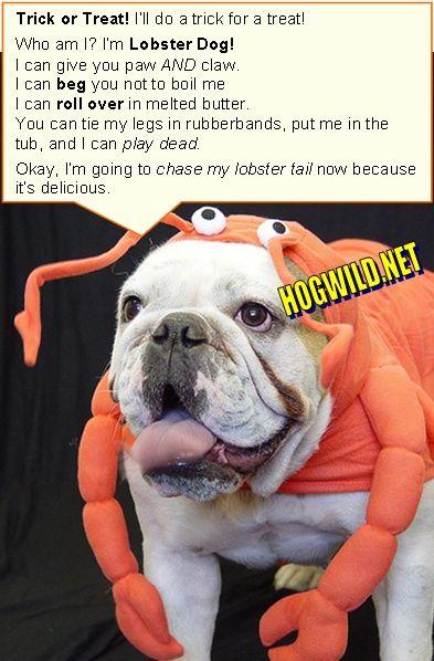 H oween dog costumes Bulldog lobster Funny MySpace