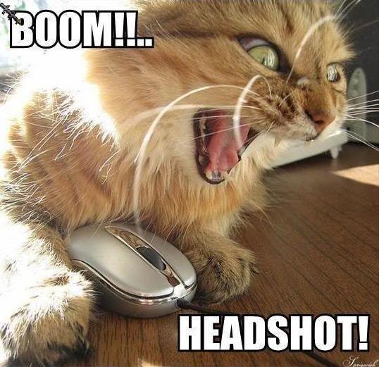 Funny gamer cat gamers gaming geek humor pc geeks puter humor games video games pc games game shop gamer internet humor Tech humor pc