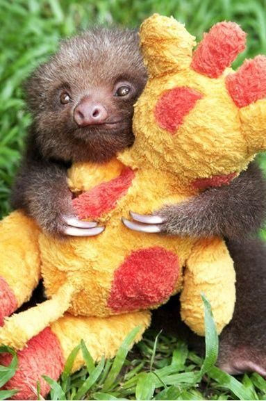 Funny pictures about Baby sloth hugging his favorite stuffed animal Oh and cool pics about Baby sloth hugging his favorite stuffed animal