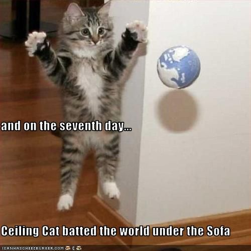 Funny Cute Cat Pics With Captions
