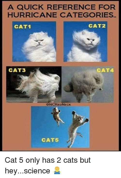 Cats Funny and Hurricane A QUICK REFERENCE FOR HURRICANE CATEGORIES CAT1 CAT2 CAT3