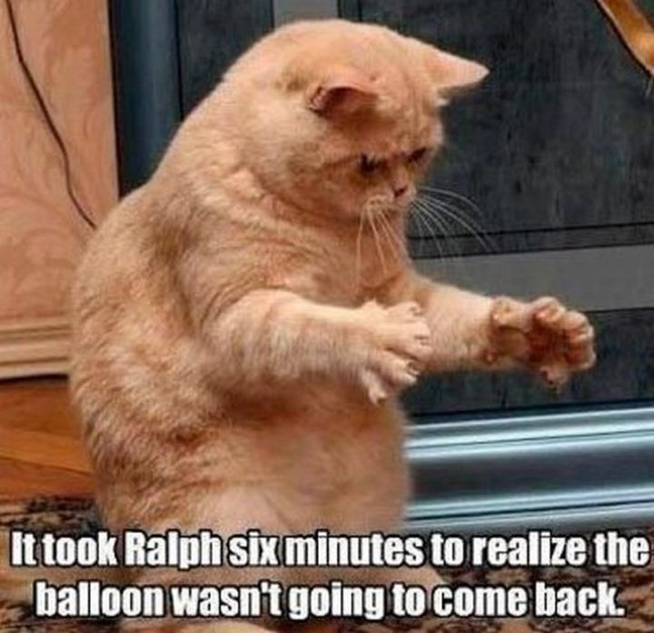 """55 Funny Cat Memes """"It took Ralph six minutes to realize the ballon wasn """""""