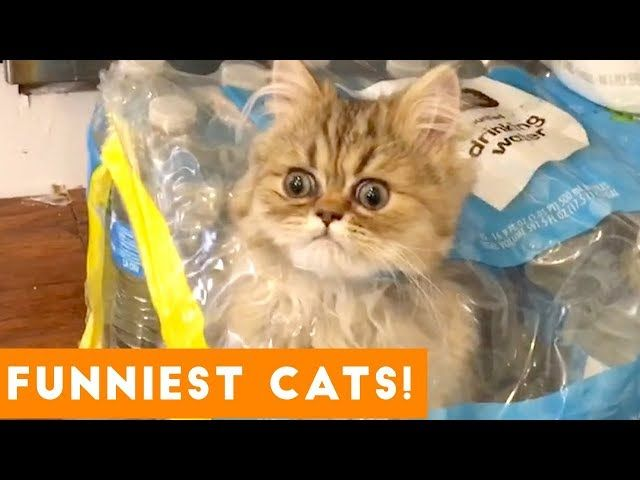 Try Not to Laugh Ultimate Cat and Kitten pilation Funny Pet Videos