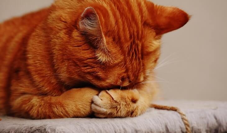 30 Funny Cat Sayings