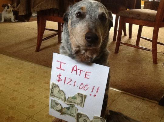best of dog shaming 2