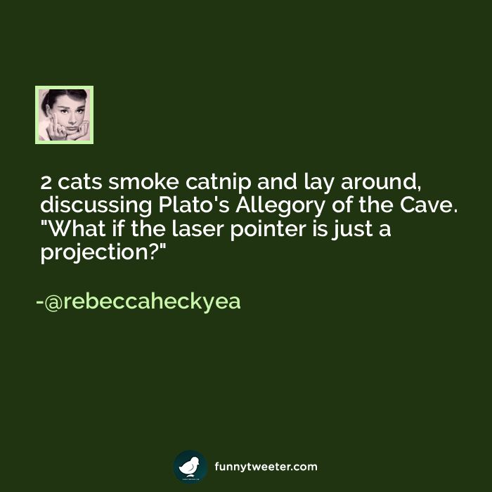"""2 cats smoke catnip and lay around discussing Plato s Allegory of the Cave """""""