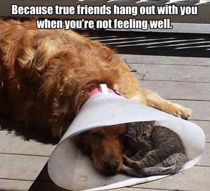 True friends AdoptDontShop