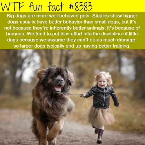 Why big dogs are more well behaved WTF fun facts bigdogsfunny