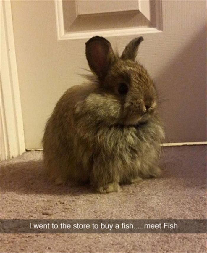 Funny Animal The Day 26 Pics