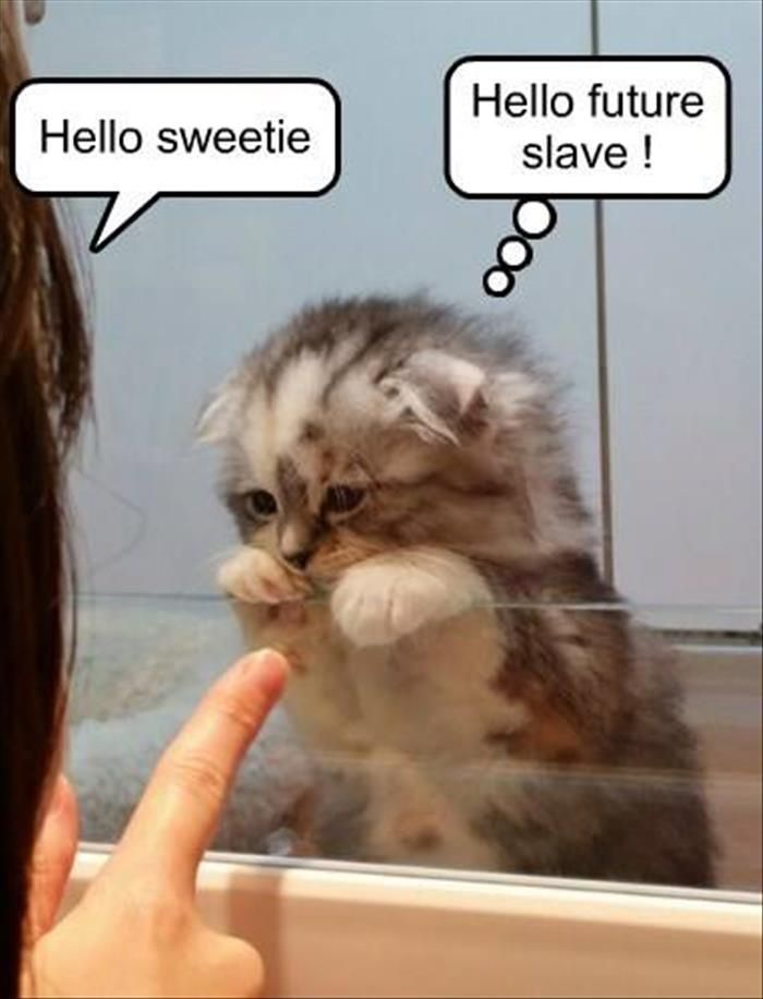 Animal Jokes Funny Cute Kittens Funny Cat Pics Funny Animal Pics Cute