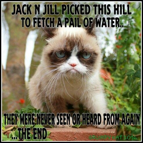 Another Grumpy Cat meme by the other Grumpy Kat 2016 Jack n Jill Grumpy cat I love this cat Pinterest