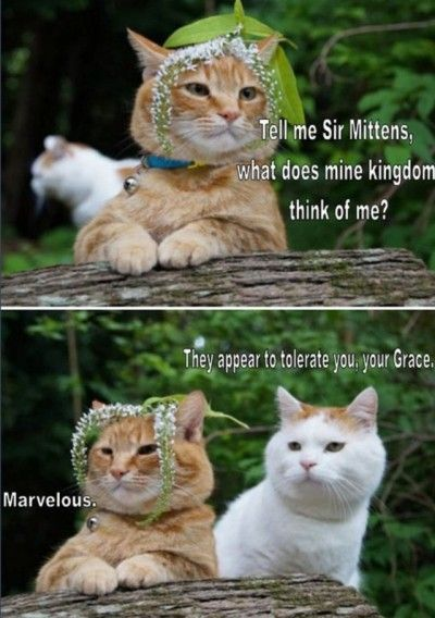 Find the Fascinating Funny Cat Memes.