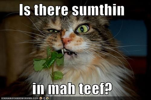 funny pictures something in cats teeth