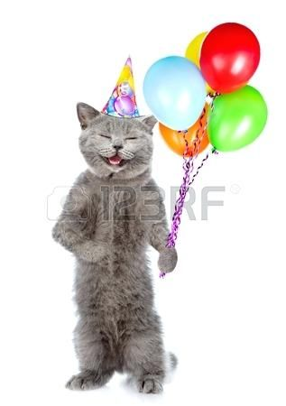 cat birthday hat happy in with bunch of balloons standing on hind legs isolated wearing cat birthday