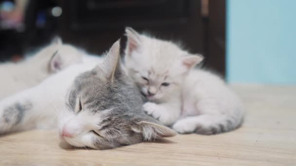 little cute kitten sleeping next to cat mom cat family care love friendship and understanding cute pets funny