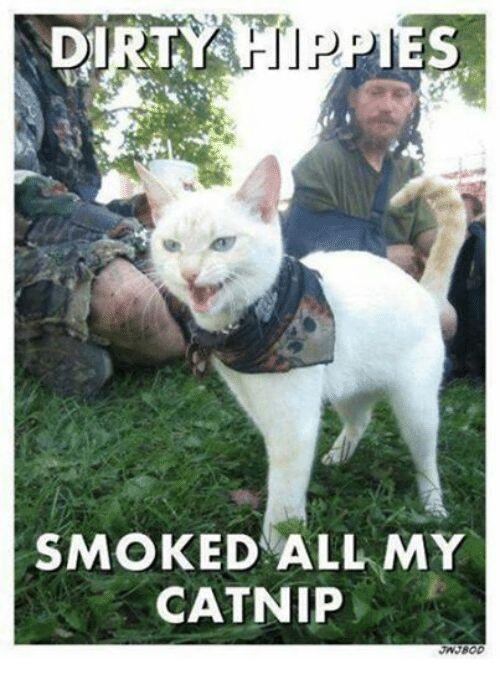 Smoking Grumpy Cat and Dirty DIRTY r rs SMOKED ALL MY CATNIP