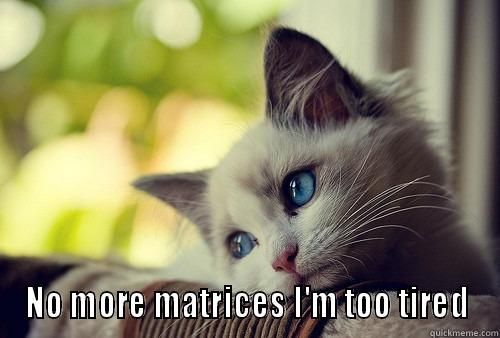 Linear Algebra NO MORE MATRICES I M TOO TIRED First World Problems Cat