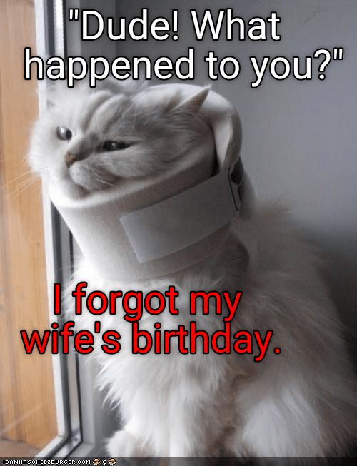 cat wearing neck brace because he forgot his wife s birthday