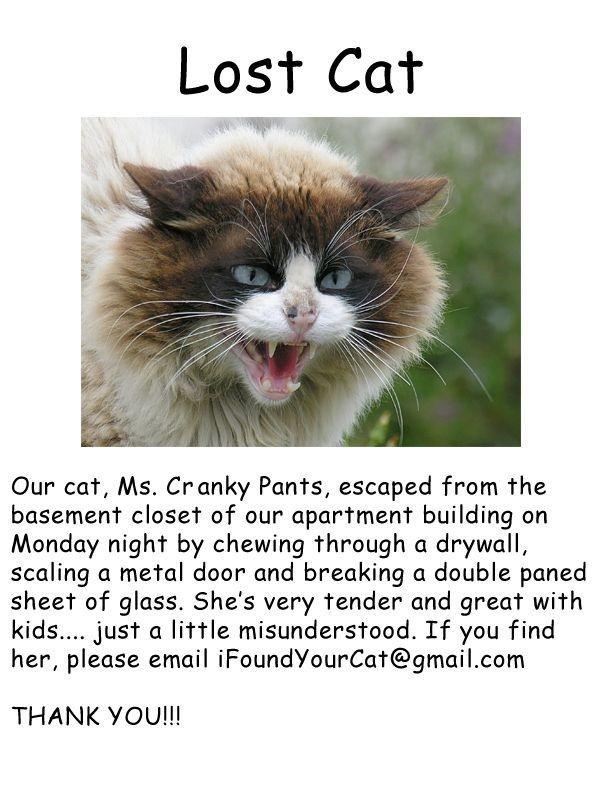 missing cat looking for Ms Cranky Pants who escaped from her home