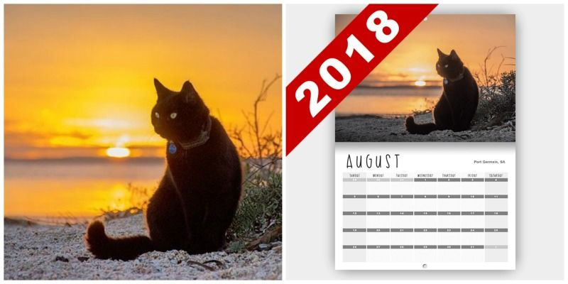 Right now you can one of Willow s pawsome 2018 calendars and off with code MNDPPOST at checkout It features 12 amazing shots of Willow one