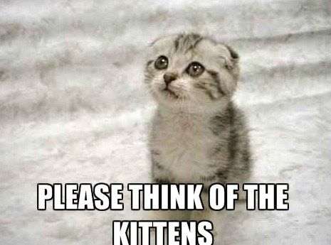 Find the Fresh Scoittish Funny Cat Memes