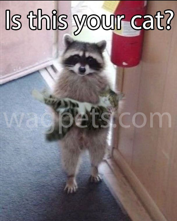 Find the Incredible Funny Animal Pictures with Captios