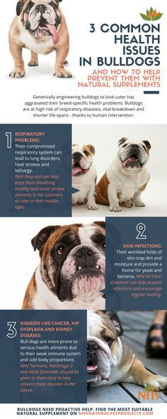 3 mon health issues in bull dogs and how to help prevent them with natural supplements