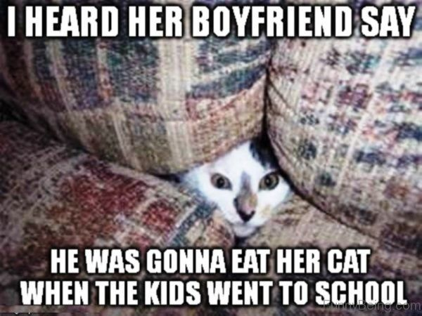 Find the Incredible Funny Appropriate Cat Pictures