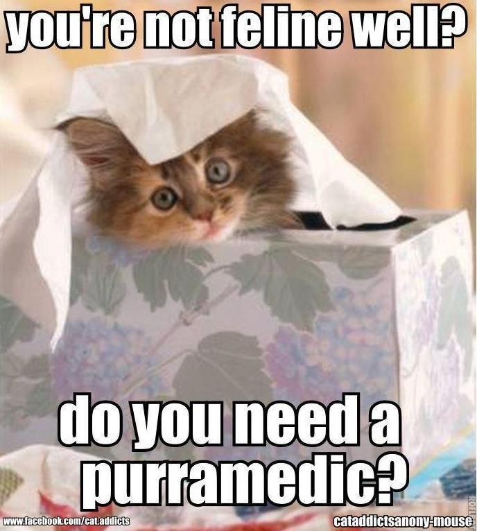 20 funny well soon memes to cheer up your dear one Crazy Cat Lady Quotes Crazy Cat Lady Costume