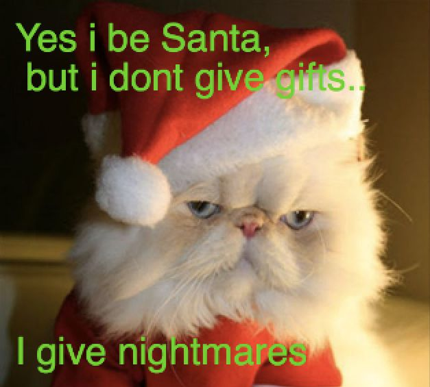 Find the Incredible Funny Cristmas Cat Pictures with Captions