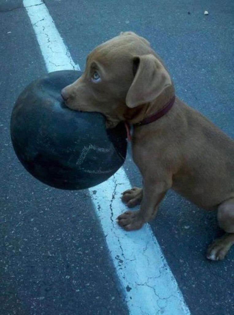 Will you e play with me master aww thats too cute