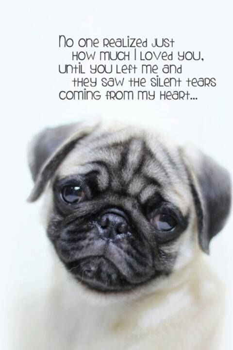 The pug is having such a hard time without you too How can I console him when I am barely holding on myself We miss you so much hurts