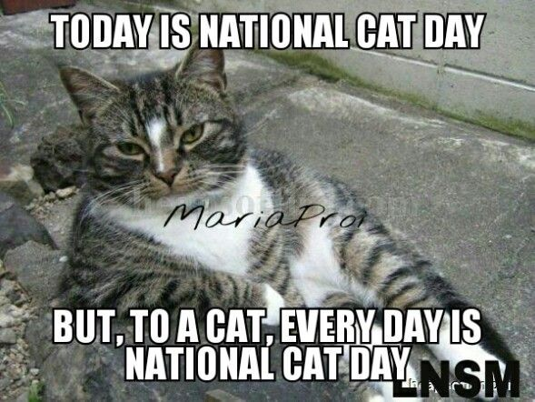 National Cat Day meme by Maria Proietti from Late Night with Seth Meyers
