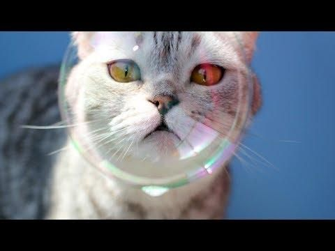 Funny Cats and Kittens Playing With Bubbles Funny Cat Videos 2018
