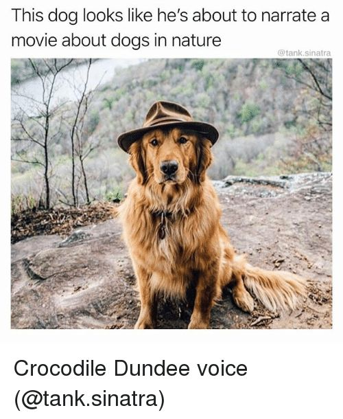 Dogs Funny and Movie This dog looks like he s about to narrate a