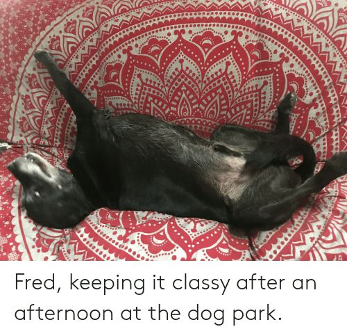 Dog Fred and Park Fred keeping it classy after an afternoon at